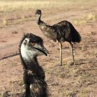 Australian Emu by jansant