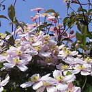 Clematis climbing towards the sun by monkeyferret