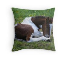 foal - at rest Throw Pillow