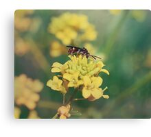 Wasp on Flower - Nature Photography Canvas Print