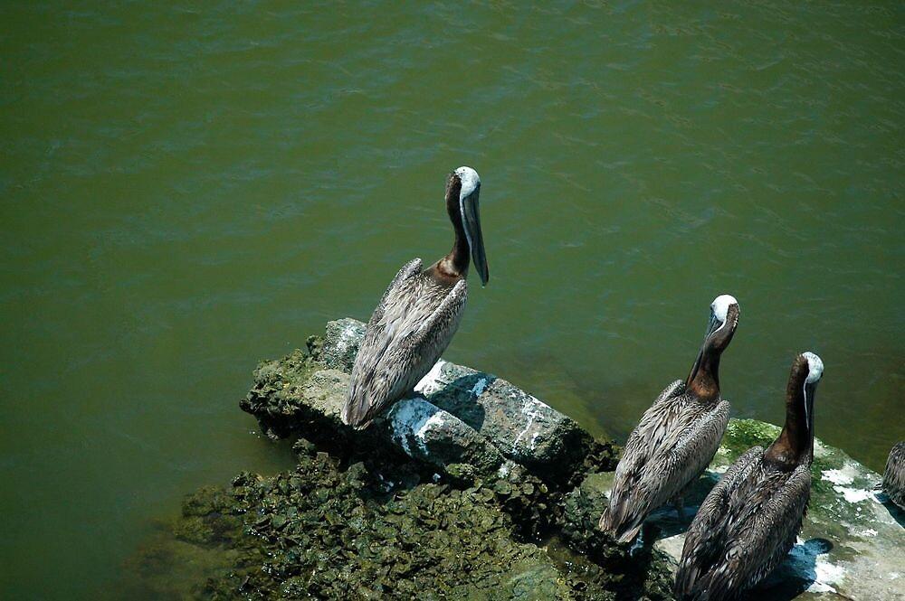 Pelicans below by Ann Reece