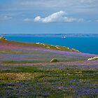 Skomer Springtime by Krys Bailey
