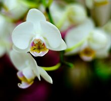 Dark Study of Orchids by robdavies