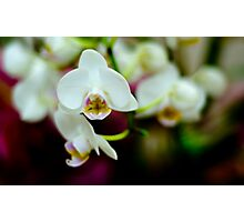 Dark Study of Orchids Photographic Print
