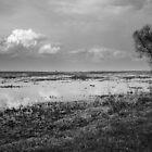 Biebrza Swamps 3 by seawhisper