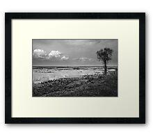 Biebrza Swamps 3 Framed Print