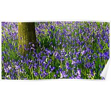 Bluebell meadow Poster