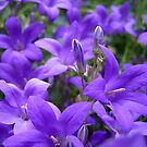 Passionate about Purple!! by hjaynefoster