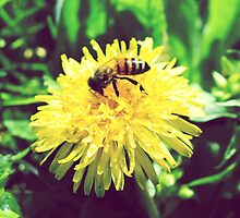 Honey Bee on Dandelion - Nature Photography by anabellstar