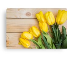 Beautiful yellow tulips  Canvas Print