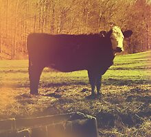 On The Farm - Photography - Nature Photography - Cow by anabellstar