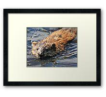 Wet Fur Framed Print