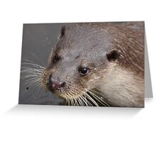 European Otter Greeting Card