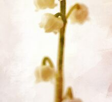 Lily Of The Valley by irinatsy