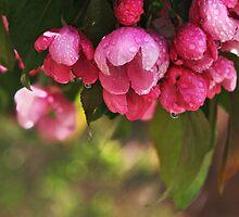 Sprng Bloosoms by Linda Davidson