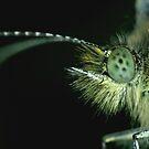 Butterfly Portrait by Ian Chapman