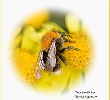 Tree bumble bee by inkedsandra