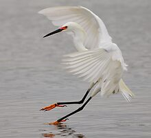 Sticking the Landing by Phillip  Simmons