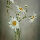 Our way by Mandy Disher