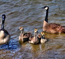 Family Outing by Kate Adams