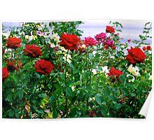 """""""Rose Garden"""" Poster"""