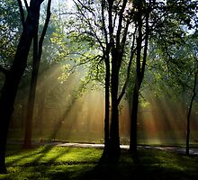 Sun Beams from Ohio by RWaters