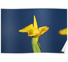 Oh, and by the way......Water Irises in Bloom! Poster