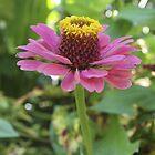 Flower by Debbie Moore