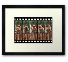 Finch on Film Framed Print
