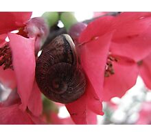 A snail at the flower! Photographic Print