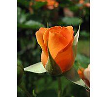 A rosebud Photographic Print