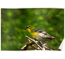 Yellow Throated Vireo Poster