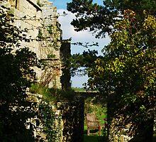 Jervaulx Abbey 6 by WatscapePhoto
