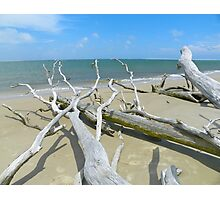 Big Talbot Island Photographic Print