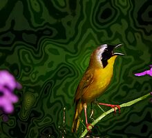 Common Yellow Throat Warbler 11 by John Absher
