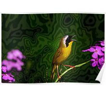 Common Yellow Throat Warbler 11 Poster