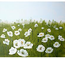 field of white poppies Photographic Print
