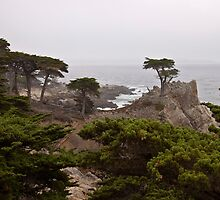 Foggy Day at Pebble Beach by Barb White