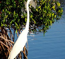 Great Egret by June Holbrook