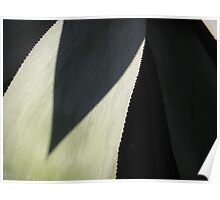 Century Plant Abstract Poster