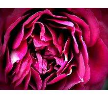 Majestic Presence Photographic Print