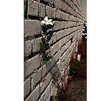 Wallflower Photographic Print