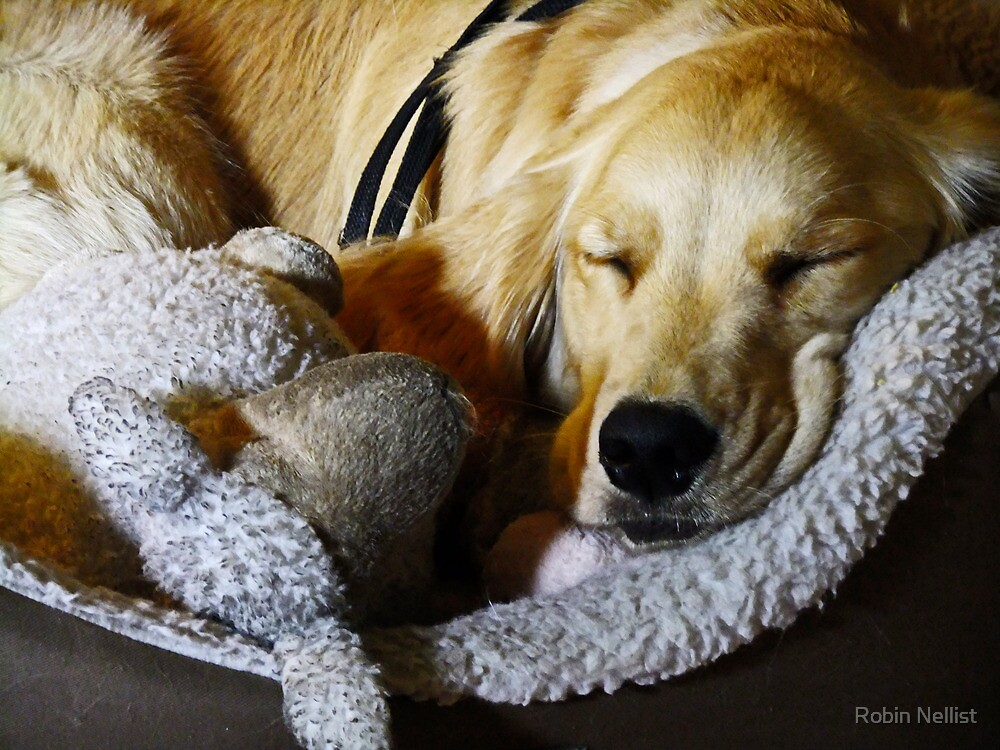 Sleepy Mia by Robin Nellist