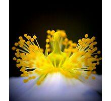 anemone mine Photographic Print
