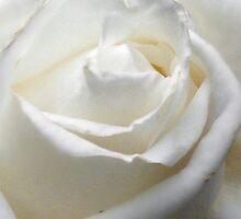 Predominantly White by snhuk