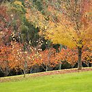 Autumn Leaves by JeniNagy