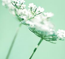 French Weeds by Sandy  Taylor Photography