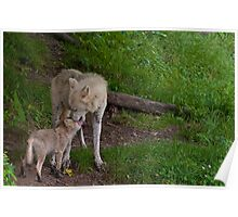 Arctic Wolf And Pup Poster