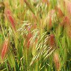 Grasses #2 by Diane Arndt