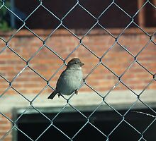 Bird on a wire fence by Bernie Stronner